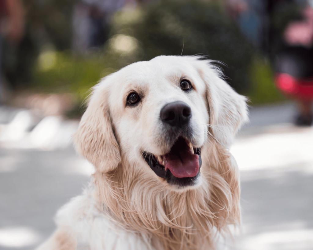 6 techniques insoupçonnées pour gagner de l'argent avec son chien